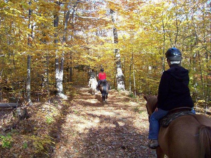 Best Lightweight Western Trail Saddles