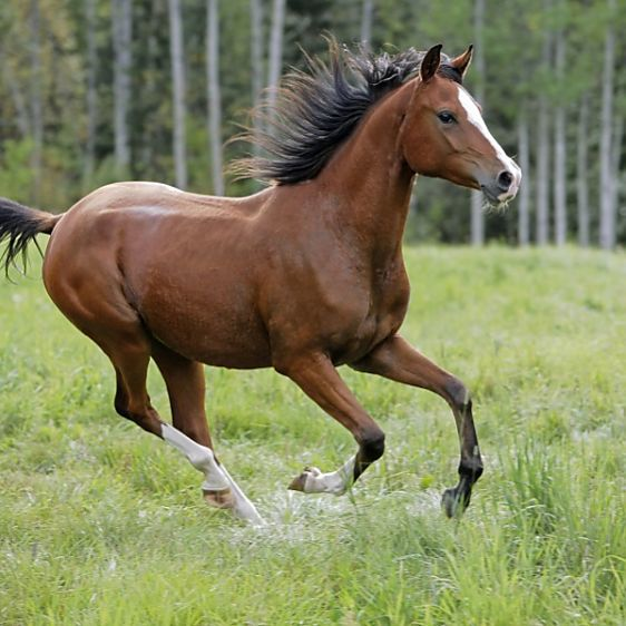 how to sit the trot