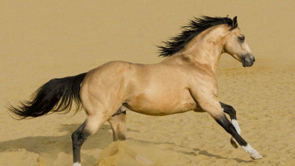 Best Western Riding Horse Breeds